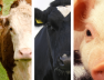01.-The-Future-of-Innovation-in-Animal-Health